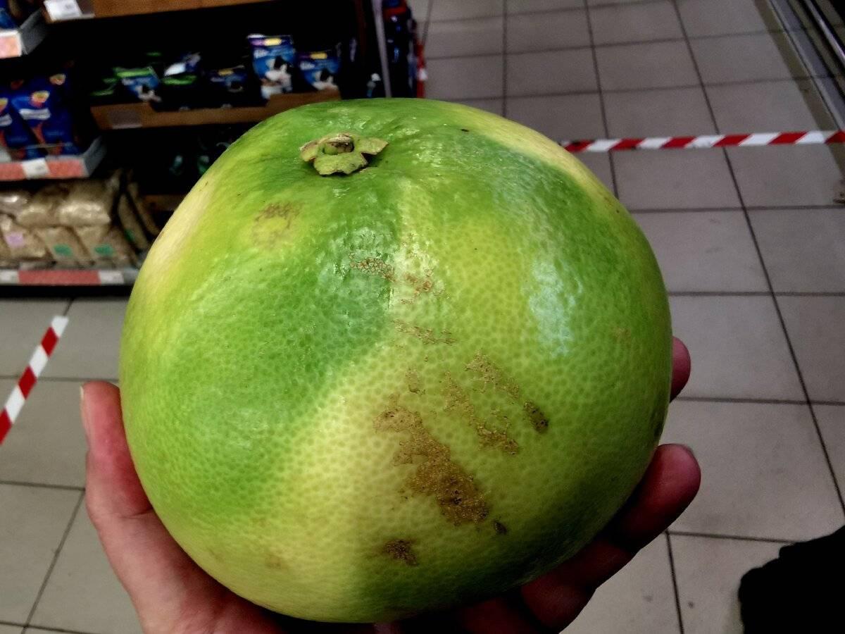 Свити фрукт - что это, полезные свойства и противопоказания