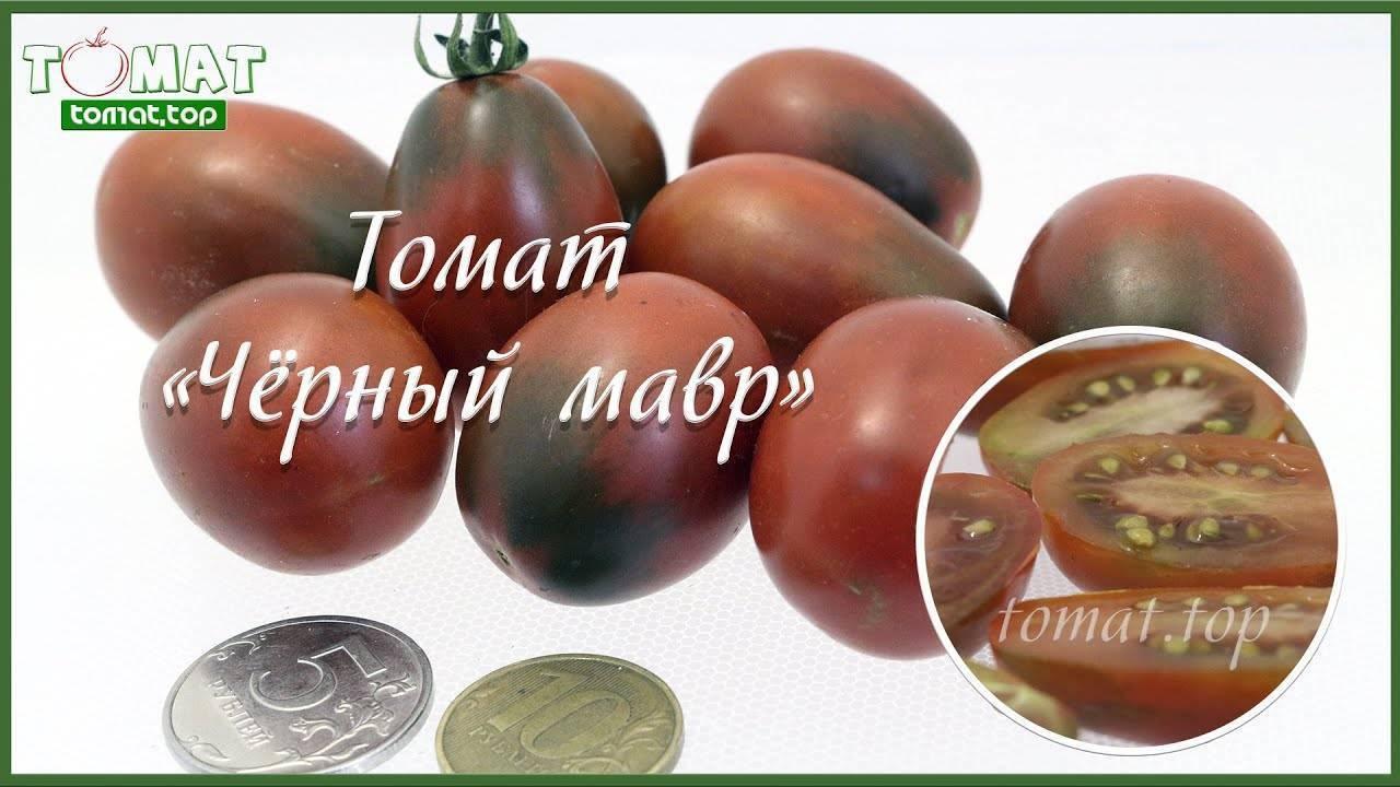 Томат черный мавр: характеристика и описание сорта, урожайность, отзывы