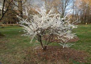 Почему яблоня не цветет – причины и что при этом делать