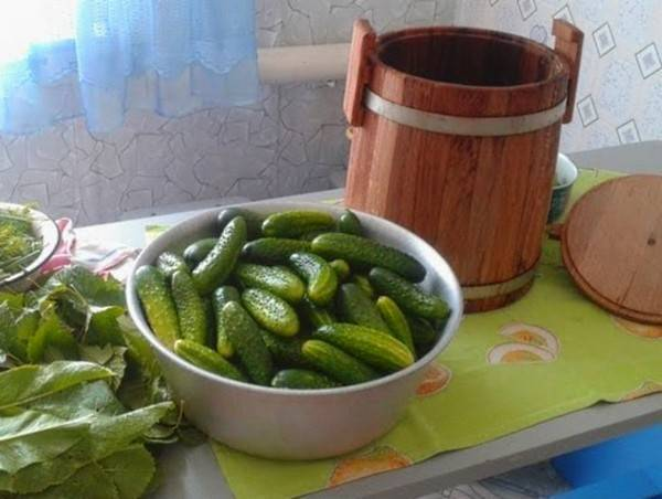 Лучшие сорта огурцов для засолки и консервирования
