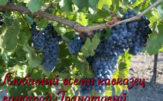 Виноградники в средней полосе россии: обзор лучших сортов