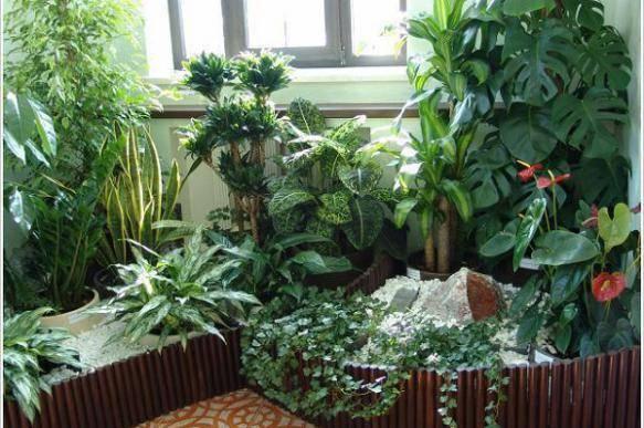 Как ухаживать за цветами домашними. комнатные цветы. как ухаживать за комнатными цветами: правильный уход за домашними растениями.