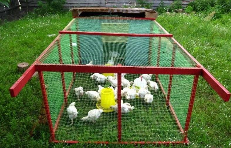 Клетки для бройлеров цыплят своими руками: фото, размеры, чертежи