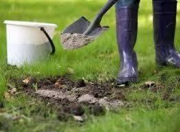 Польза и вред древесной золы в огороде