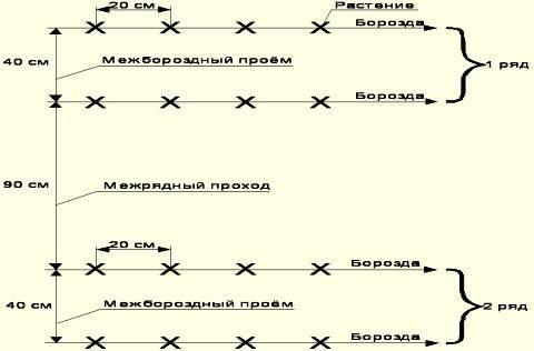 Расстояние между огурцами при посадке | садоводство24