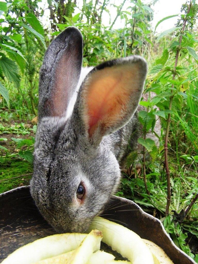 Какую кору едят зайцы зимой. чем питается заяц в лесу? чем питаются зайцы зимой