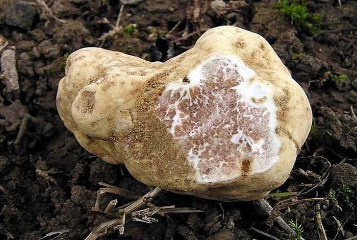 Самые редкие и удивительные грибы в мире | интересный сайт