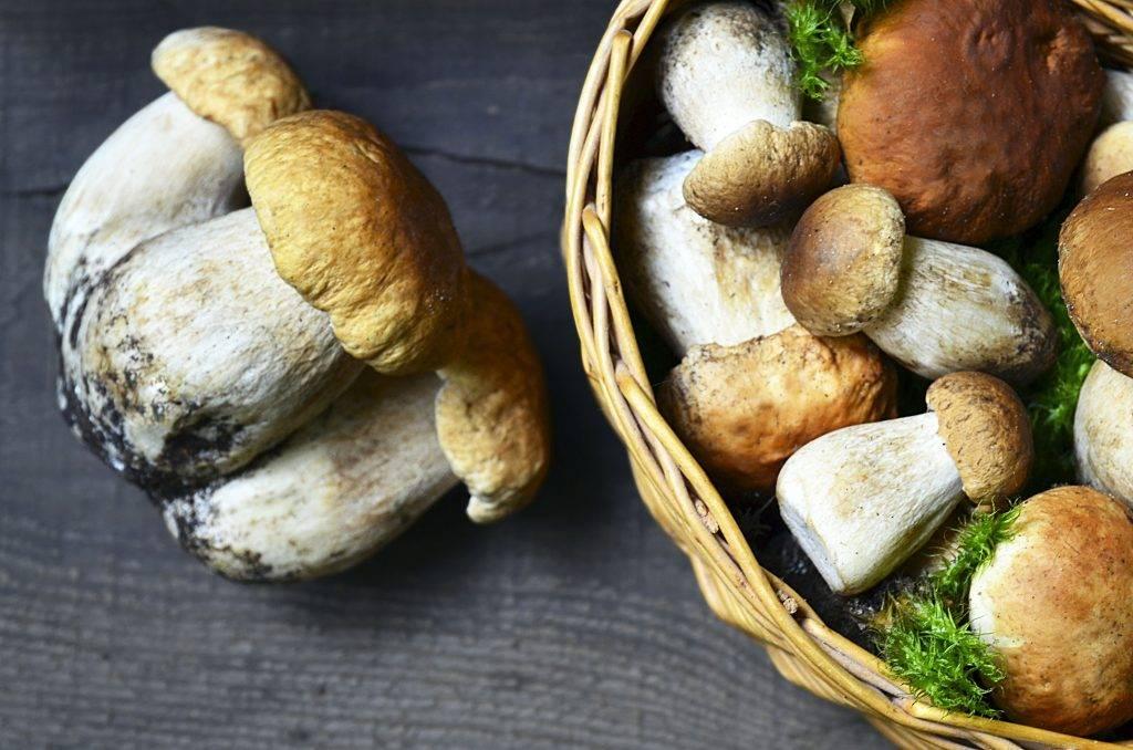 Грибы красноярского края 2020: когда и где собирать, сезоны и грибные места