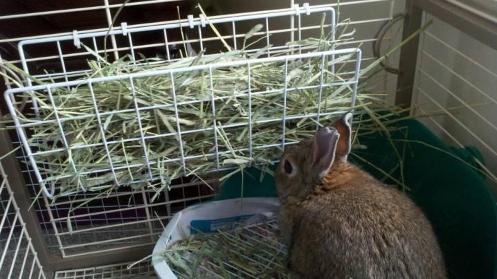 Шеды для кроликов: схемы и чертежи, инструкция по изготовлению своими руками