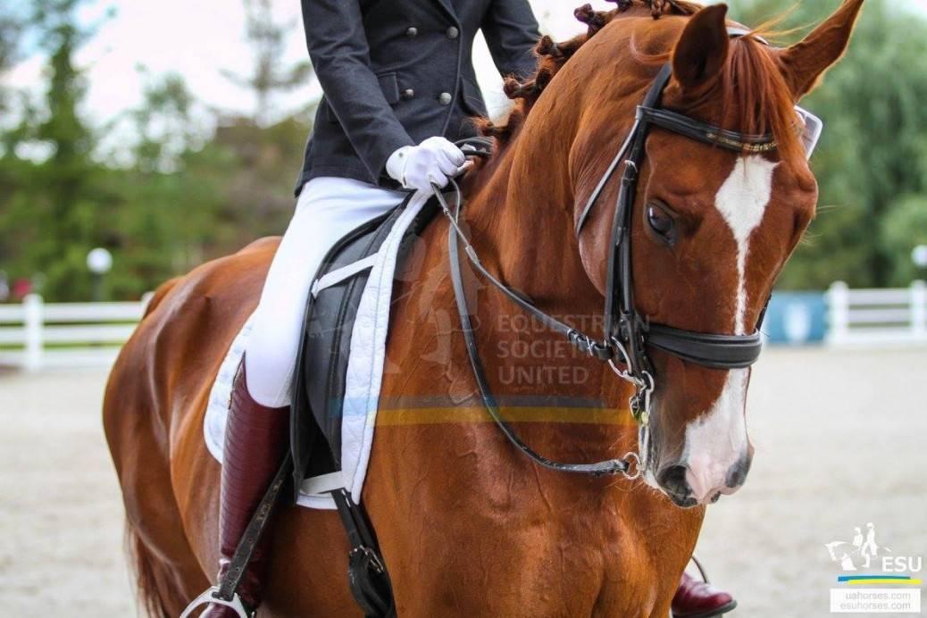 Уздечка для лошади (30 фото): что это такое? размеры и строение узды. как своими руками правильно надеть недоуздок на коня? виды уздечек