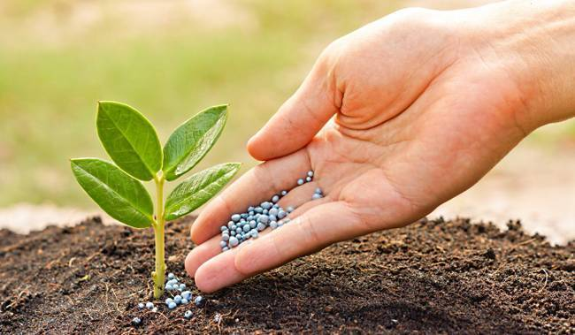 Мочевина: удобрение, применение на огороде, состав, инструкция, отзывы