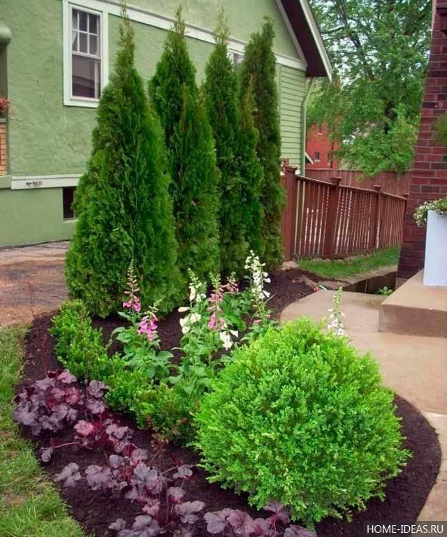 Декоративные хвойные растения для сада: 110 фото и видео описание как и где лучше садить в саду и на участке хвою