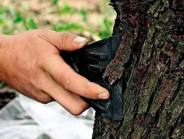 Чем полить дерево, чтобы оно быстро засохло: как засушить, уничтожить