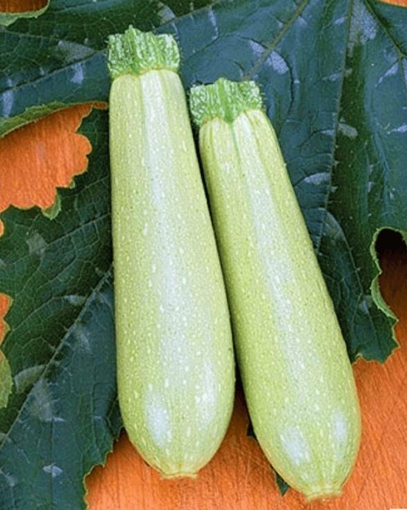 Кабачок «искандер» f1: описание сорта и опыт выращивания гибрида