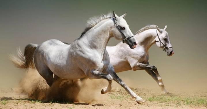 Сколько живет лошадь: продолжительность