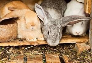 Кроличий навоз как удобрение: польза, применение, хранение