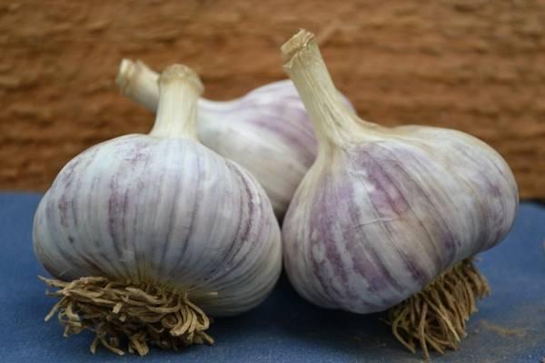Описание сорта чеснока комсомолец, особенности выращивания и ухода