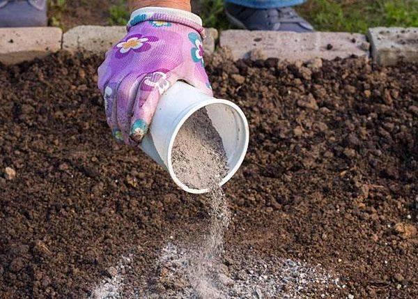 Весенняя подкормка пионов и последующие: чем полить и подкормить цветов |