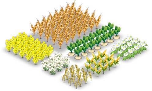 Севооборот растений на даче в огороде, чередование культур при выращивании
