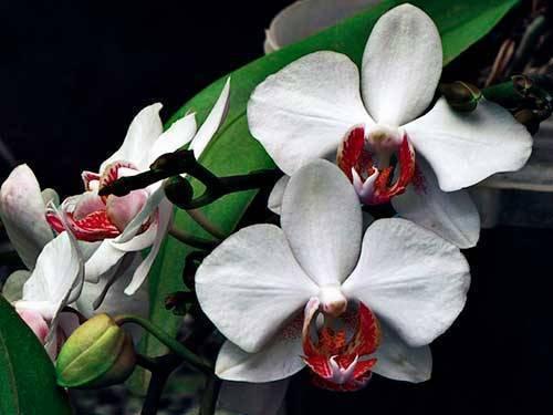 Орхидея необычных форм и цветов, интересные горшки, самая яркая, различные цветки, фото и видео от специалистов