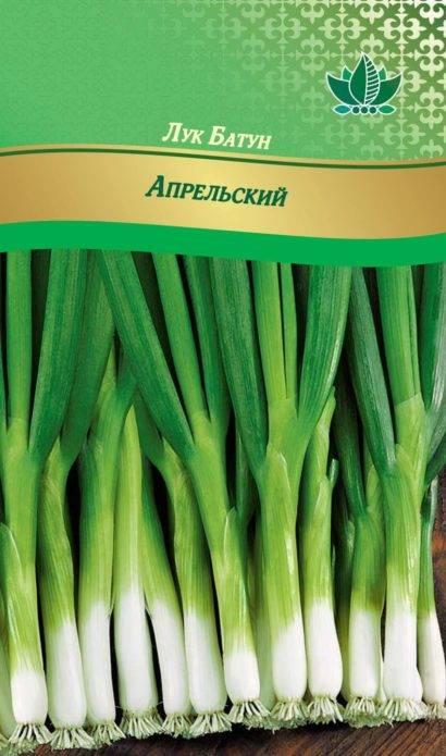 Секреты богатого урожая: посадка и уход за луком-батуном в открытом грунте
