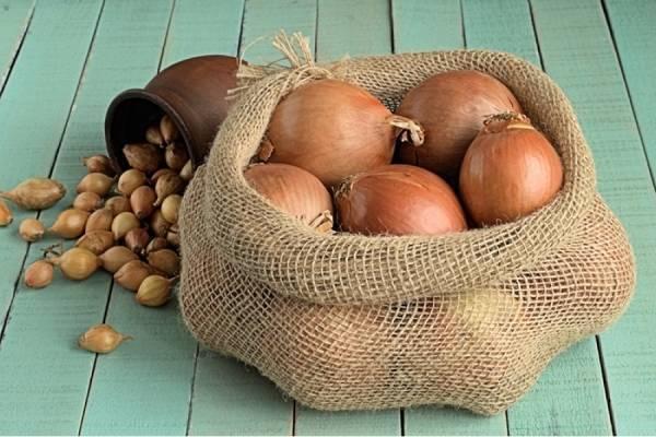 Вкуснейший сорт лука россана: описание и советы по выращиванию