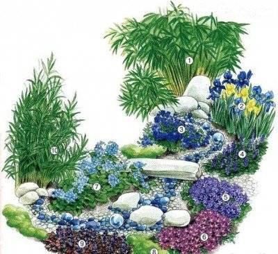 Лобелия многолетняя (32 фото): посадка и уход за цветком, советы по выращиванию в открытом грунте, описание сортов