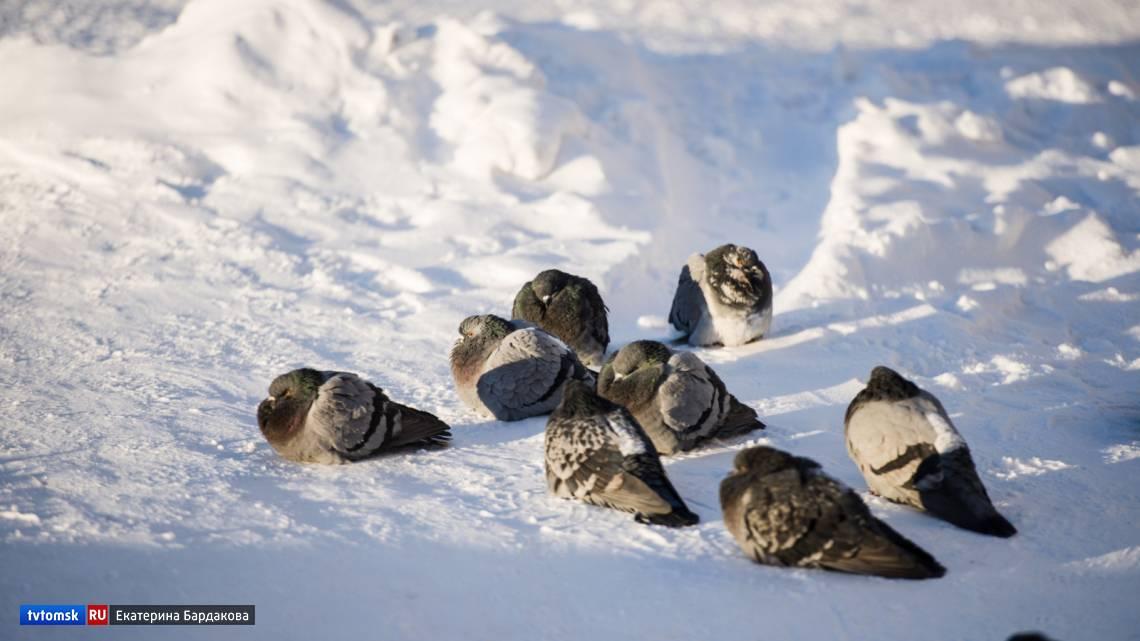 Болезни голубей: симптомы, профилактика и лечение