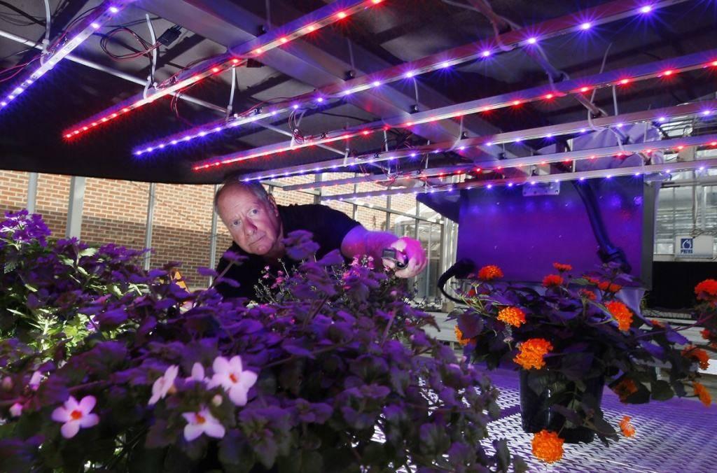 Простая led фитолампа для растений своими руками