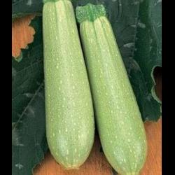 Кабачок «искандер» f1: отзывы, фото, описание сорта и личный опыт выращивания гибрида