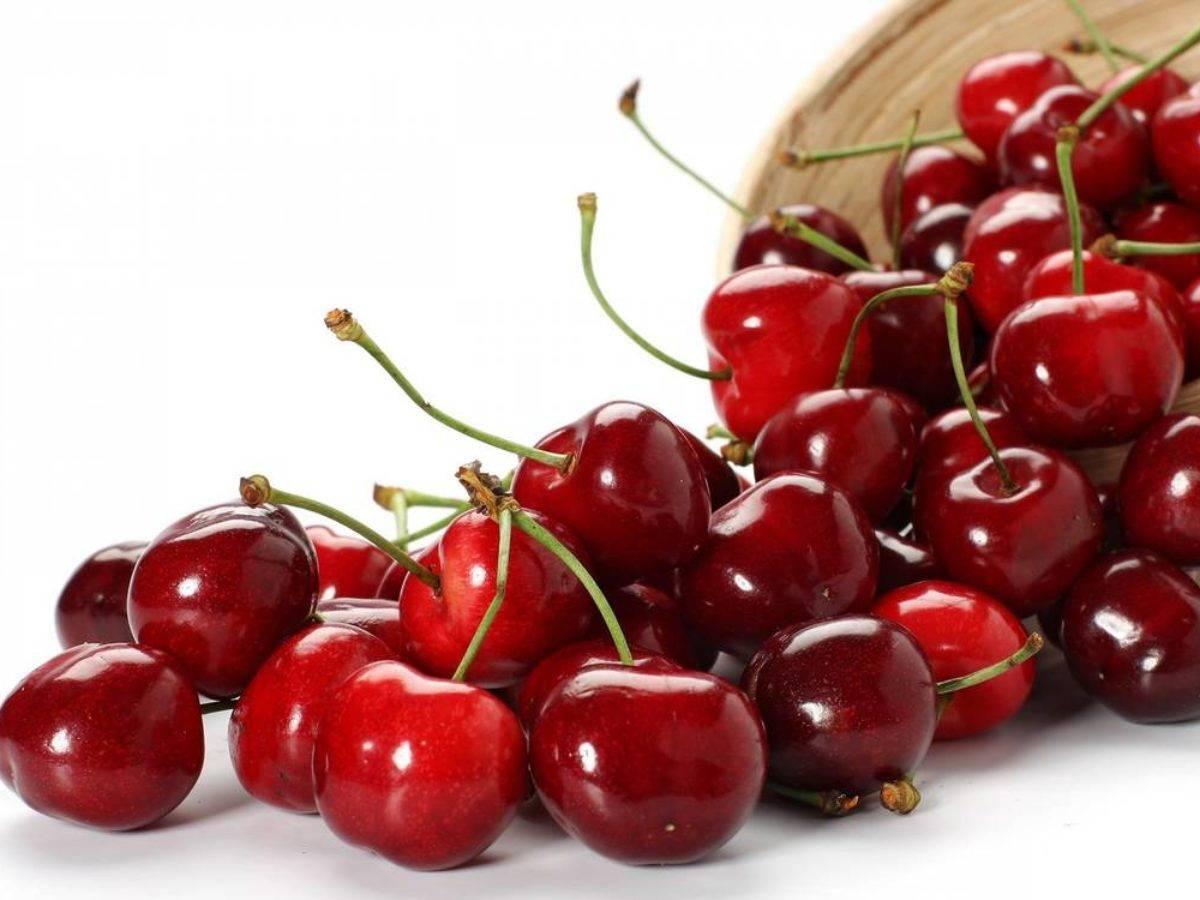 Сорт вишни малышка: описание, фото и отзывы садоводов, как выращивать, посадить и ухаживать за плодовым деревом