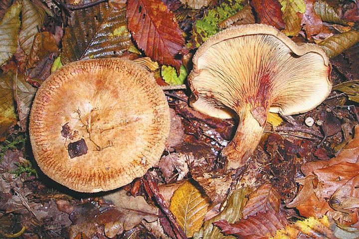 Грибы крыма 2021: когда и где собирать, сезоны и грибные места