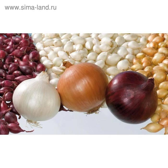 Голландский лук-севок: сорта, вырастающие из семян за один сезон, описание и фото лучших разновидностей, их особенности, преимущества и недостатки