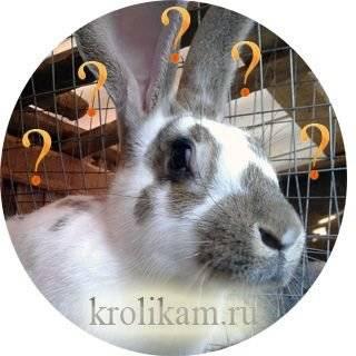 Можно ли давать кроликам яблоки?
