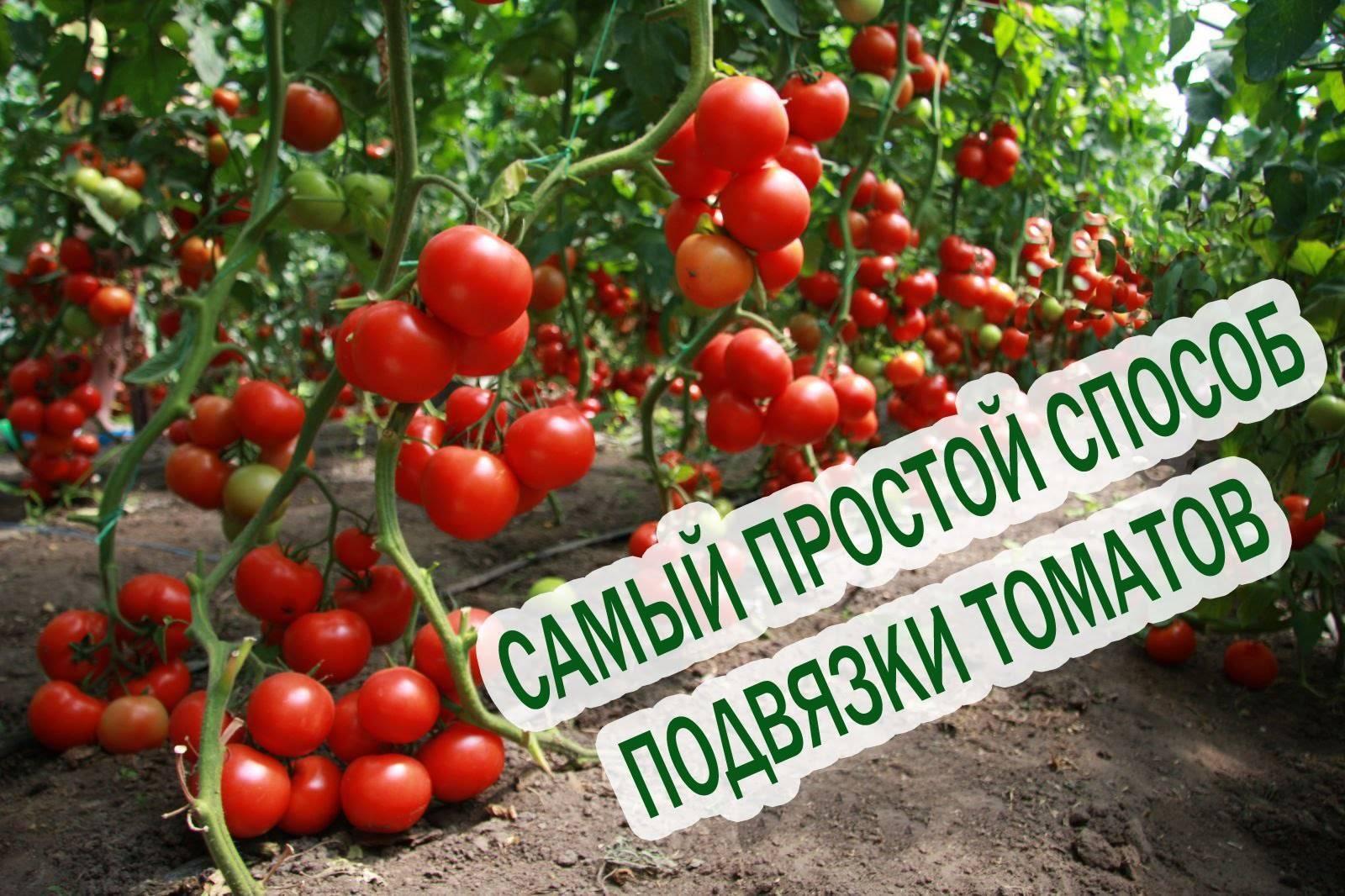 Как подвязывать помидоры в теплице из поликарбоната?