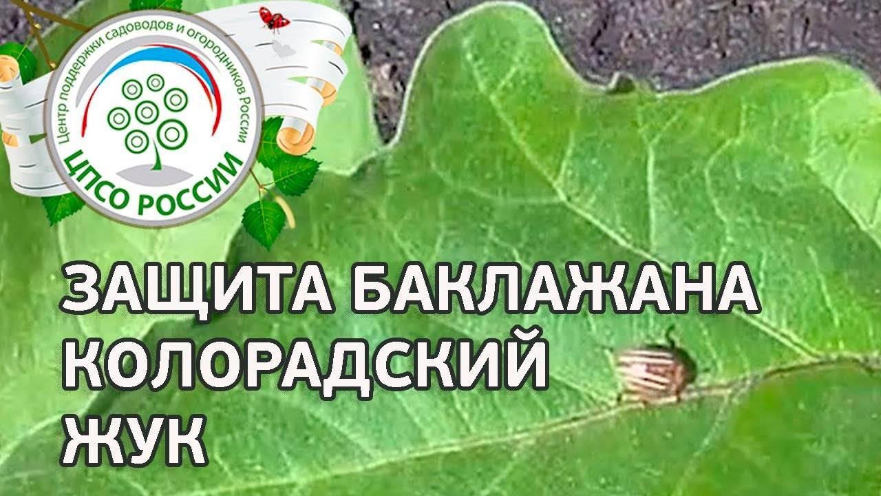 """""""биокилл, кэ"""" - инструкция (состав, регламенты применения и пр)"""