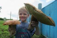 Грибы ставропольского края 2021: когда и где собирать, сезоны и грибные места