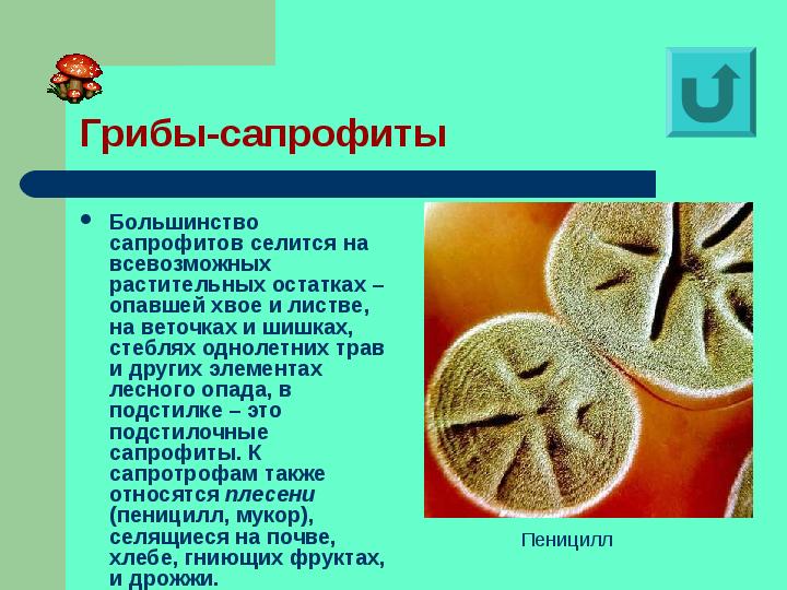 ✅ сапротрофы особенности питания и представители - питомник46.рф