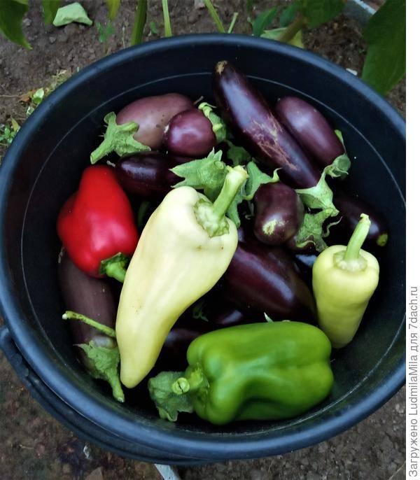 Как правильно и чем подкормить рассаду перца