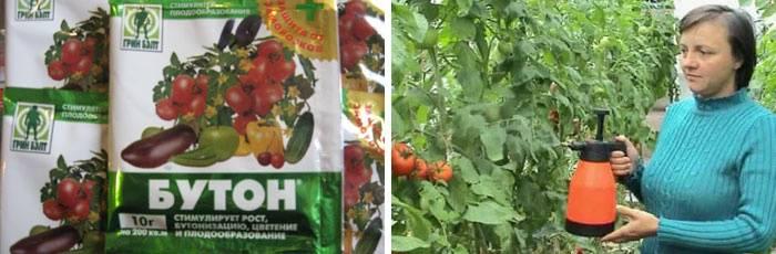 Чем опрыскать помидоры после дождя: сыворотка, йод, борная кислота и другие средства