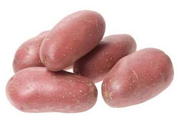 Сорт картофеля родриго: характеристика и описание с фото, отзывы