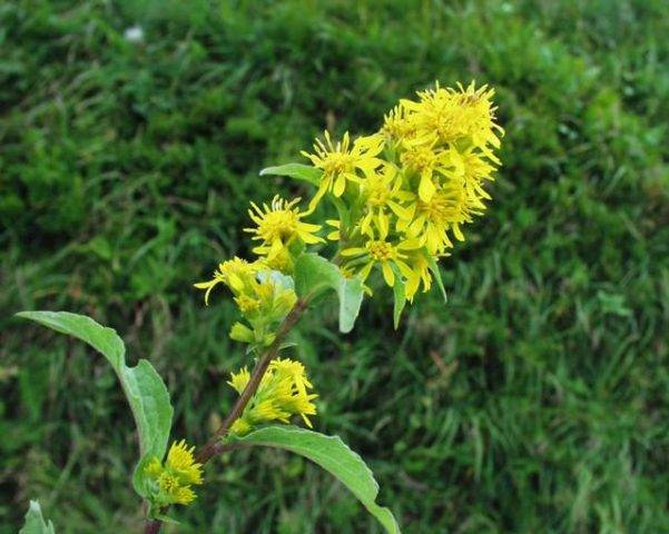 Топ 5 цветов-медоносов для создания пчелиной клумбы – правила посадки и ухода — agroxxi