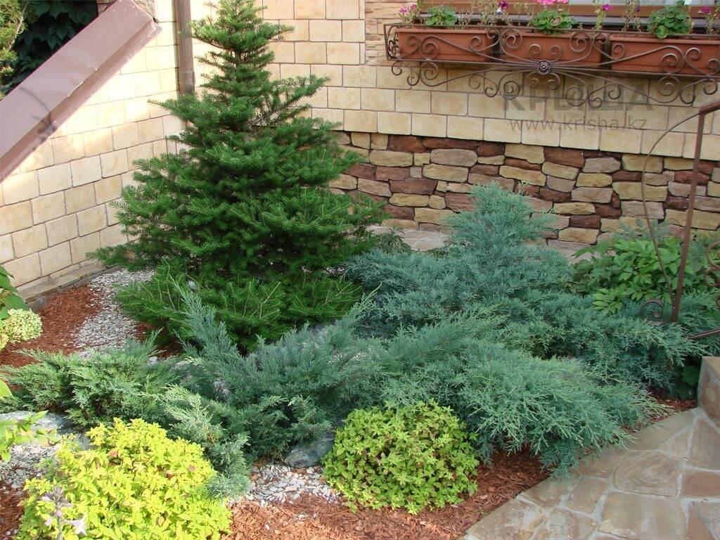 Хвойные растения для сада с фото и названиями: какие выбрать и как их сажать