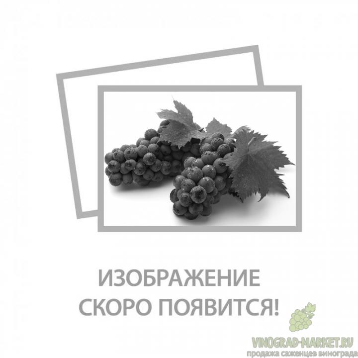 Виноград северный саперави: описание сорта, фото, отзывы