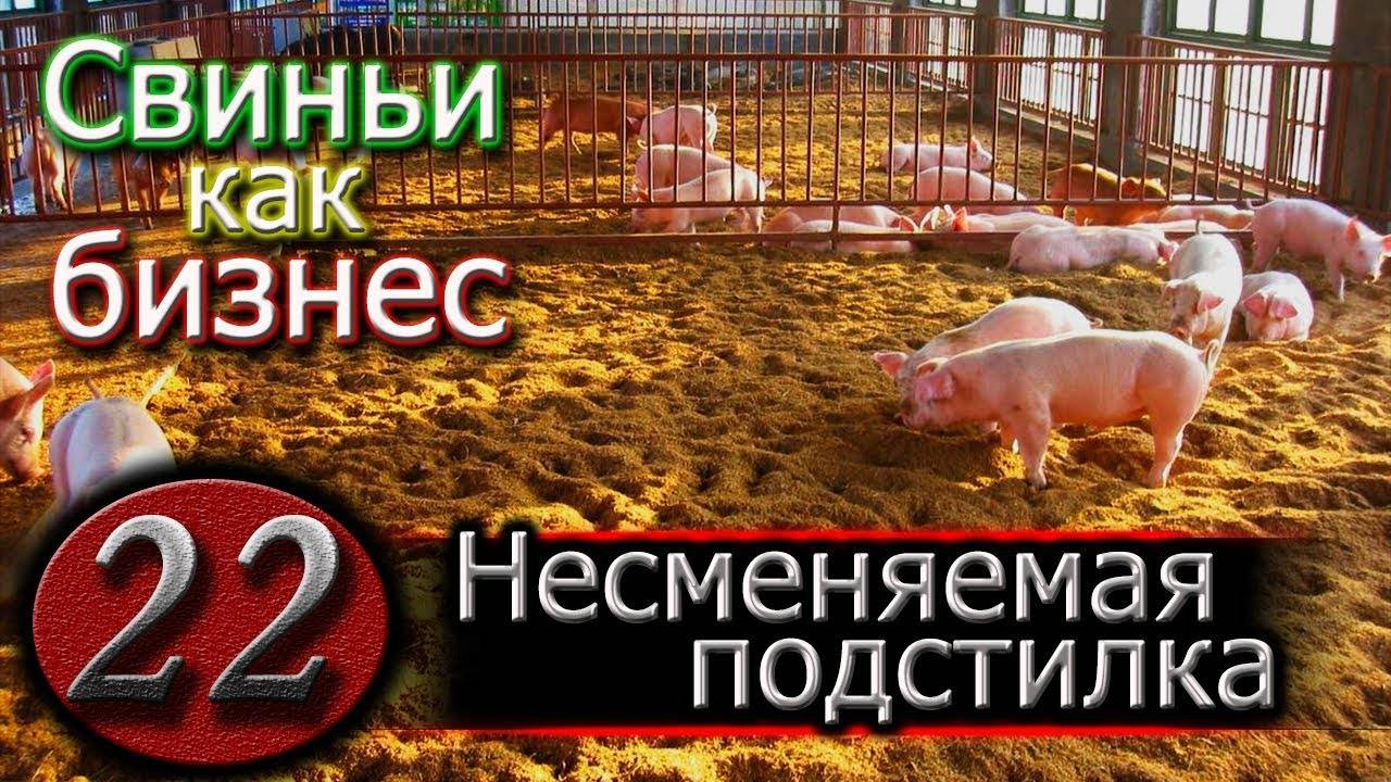 Подстилка для свиней: как выбрать глубокую теплую подстилку? особенности несменяемых, ферментационных и биоподстилок с бактериями