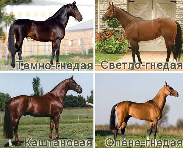Башкирская лошадь — описание, характеристики, история
