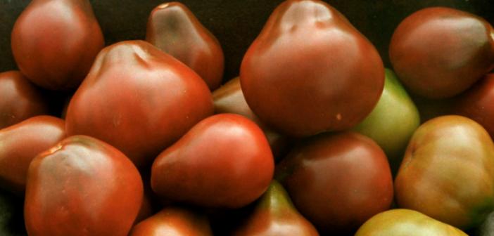 Томат сибирская груша красная: фото семян от уральский дачник, описание и характеристика сорта, отзывы об урожайности помидоров
