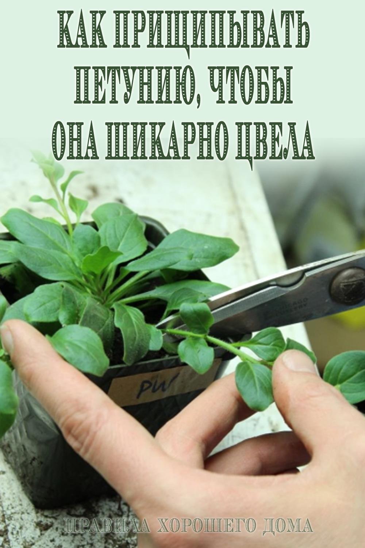 Как прищипывать петунию правильно: пошагово с фото и видео
