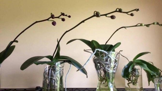 Как ухаживать за орхидеей – инструкция по уходу и правильной пересадки растения в домашних условиях