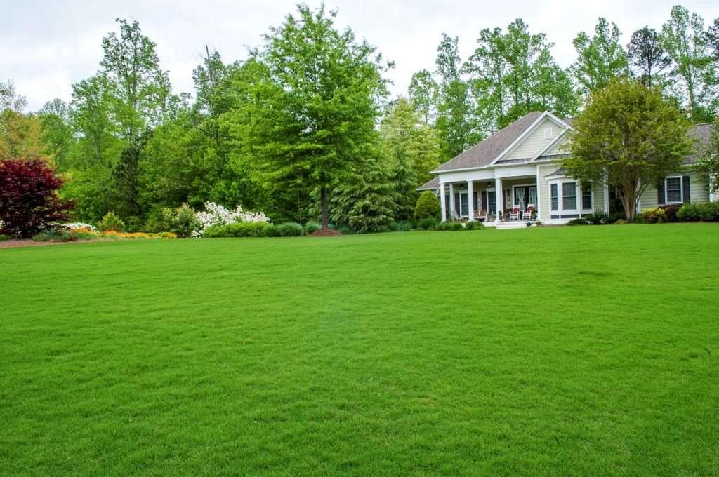 Газонная трава: виды, особенности, характеристики, сравнение стоимости, что учесть при выборе травы